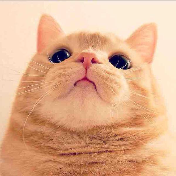 front facing camera funny cat