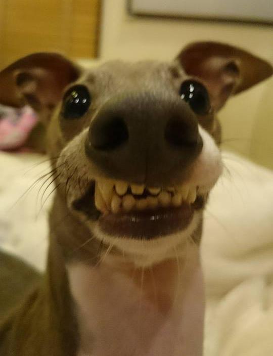 Funniest dog face on the internet  Funniest dog fa...