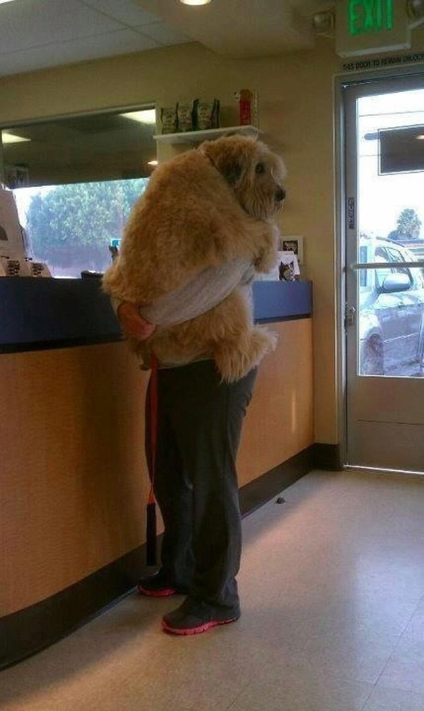 dogs realize theyre going to the vet
