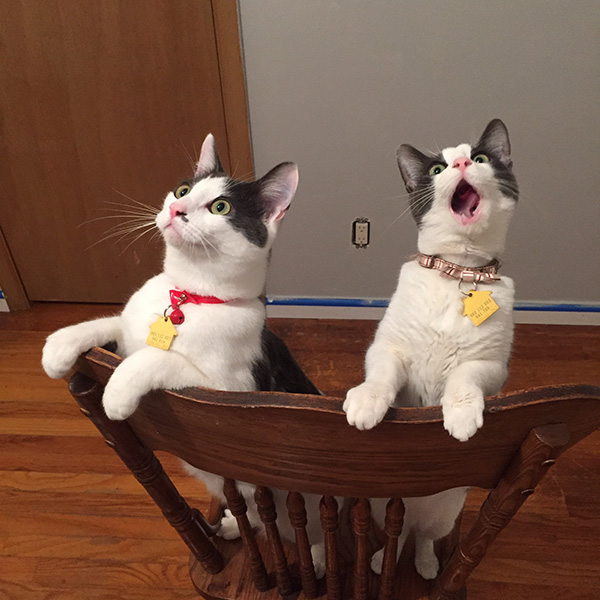 cats ceiling fans reactions first time