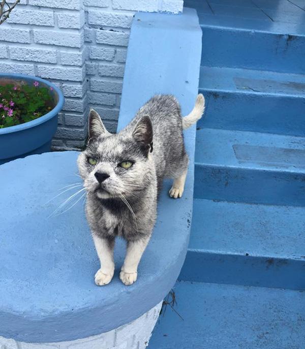 cat looks like a wolf