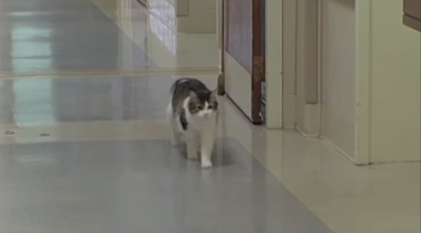 cat stay with dying patients