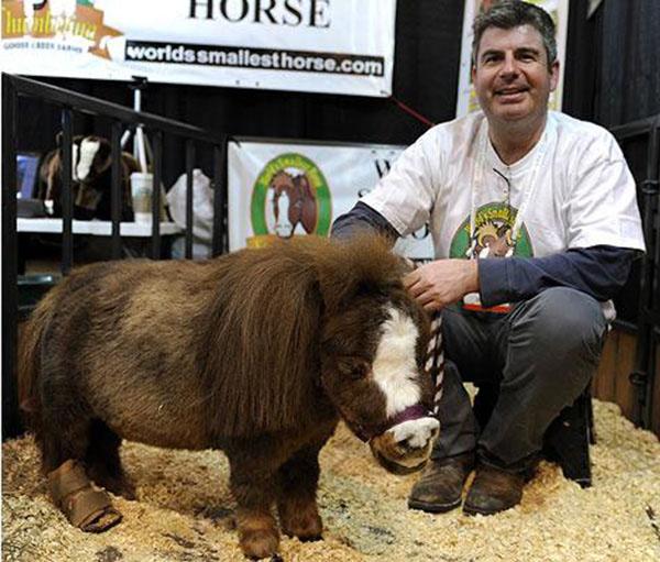 worlds smallest horse thumbelina