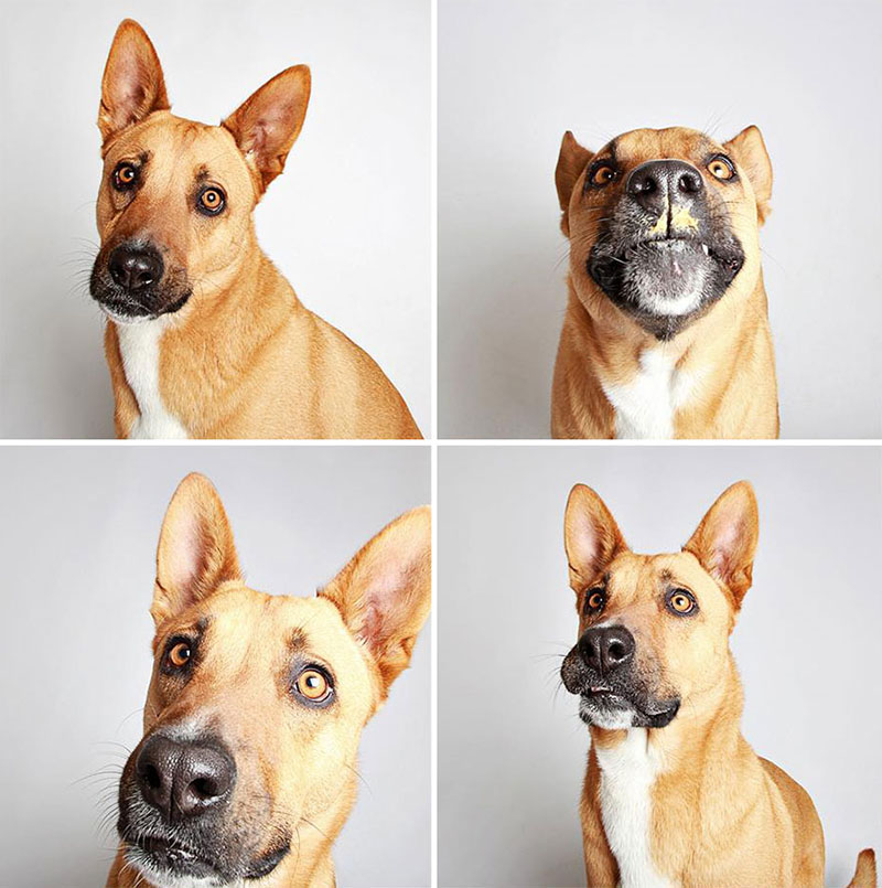 photobooths for dogs