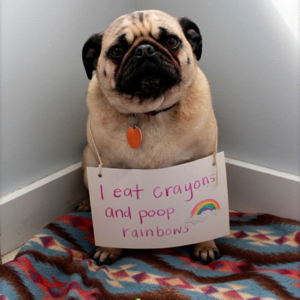 dog shaming at its finest