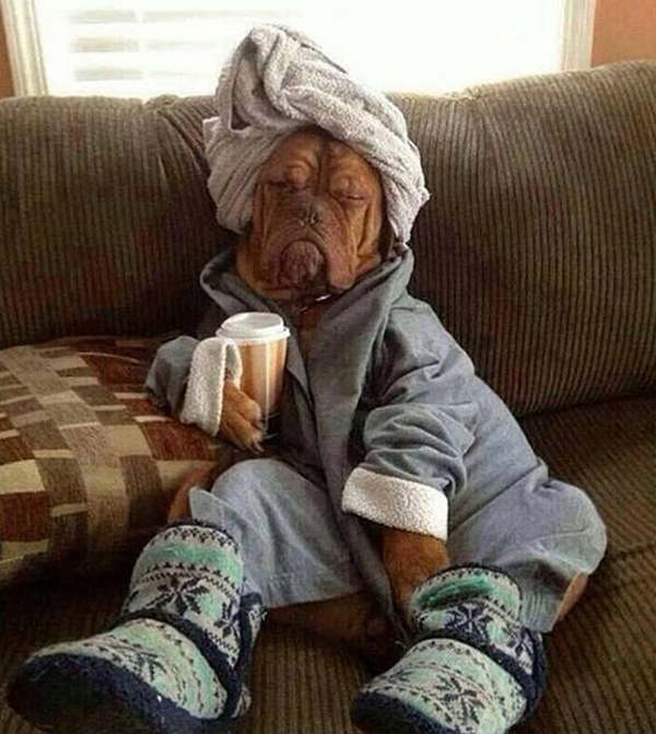 funny dog in towels and slippers