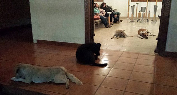 stray dogs attend funeral for woman who fed them