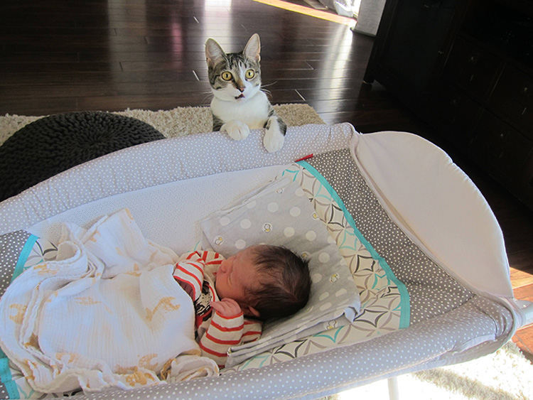forgot to tell the cat about the baby