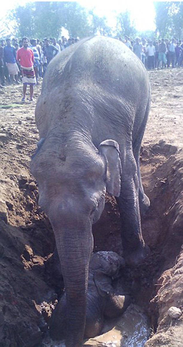elephant 11 hours saving baby