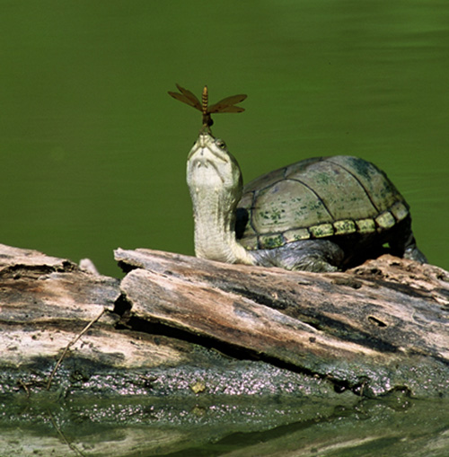 turtle dragonfly moment