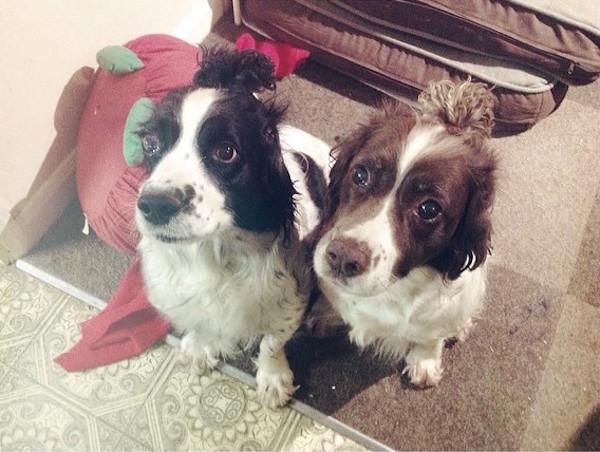 dog buns