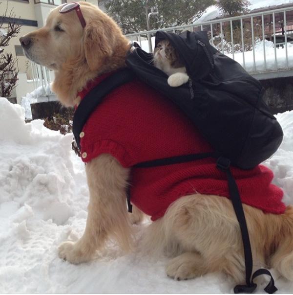Dog Cat Snow