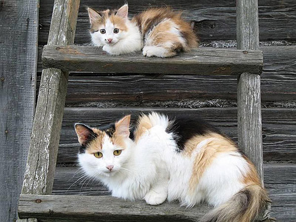 dog and cat mini mes