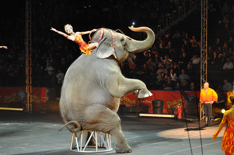 elephants saved from circus