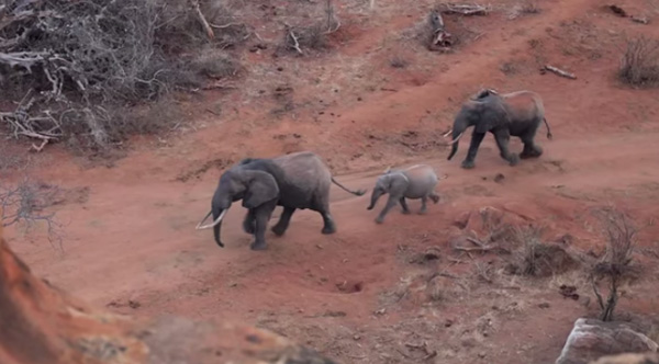 save elephants with drones