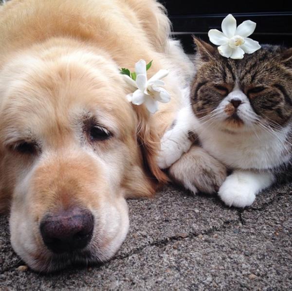 dog cat best friends