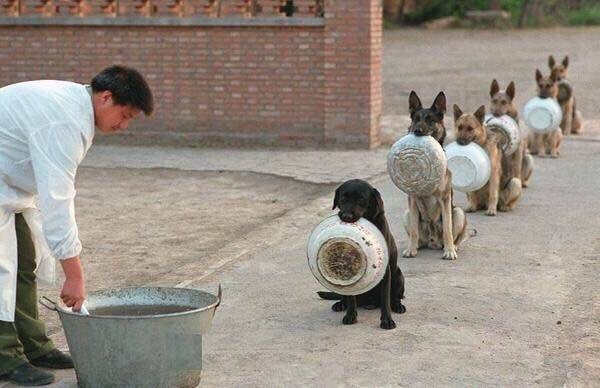 police dogs in China wait for food