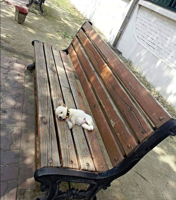 cute puppy nap on bench