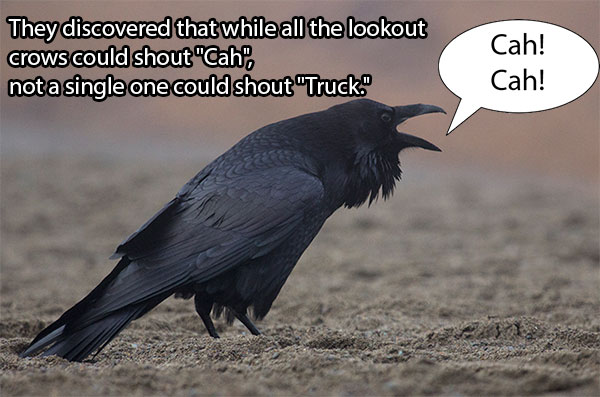 After Concerns Over 200 Dead Crows In Boston Researchers