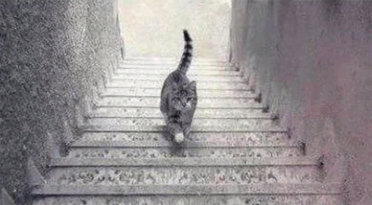 http://www.sunnyskyz.com/blog/781/This-Photo-Of-A-Cat-On-The-Stairs-Is-Causing-A-Massive-Internet-Debate-Is-It-Going-Up-or-Down-