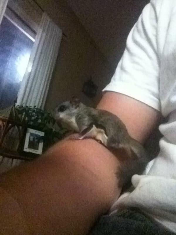 tribute to his pet squirrel
