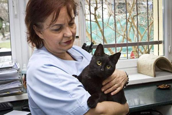 nursing cat shelter