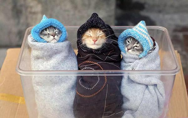 cat burritos
