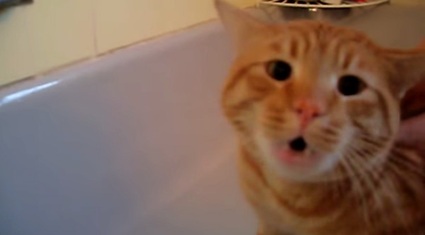 http://www.sunnyskyz.com/happy-videos/2224/Cat-Screams-NOOO-As-Owner-Tries-To-Give-Him-A-Bath
