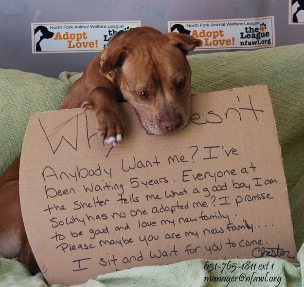 dog adoption poster
