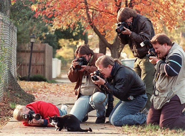 what photographers do to get the perfect shot cat