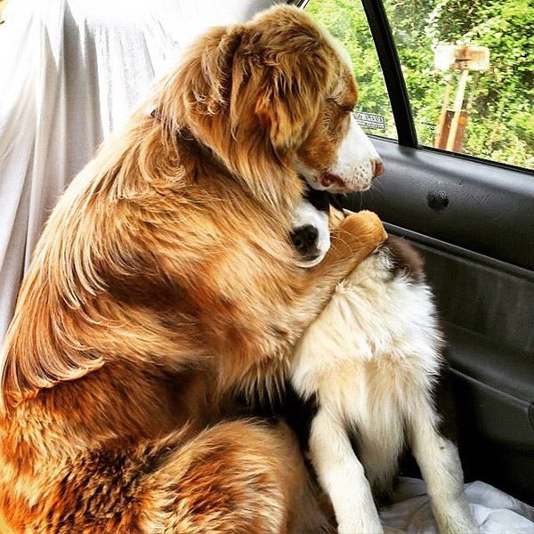 dogs hugging in car