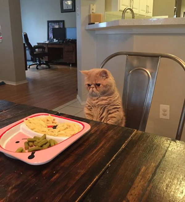 george cat not happy about pasta