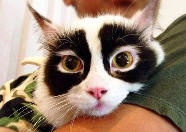 cat secret identity black eyes