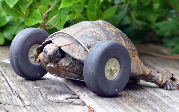 tortoise gets wheels