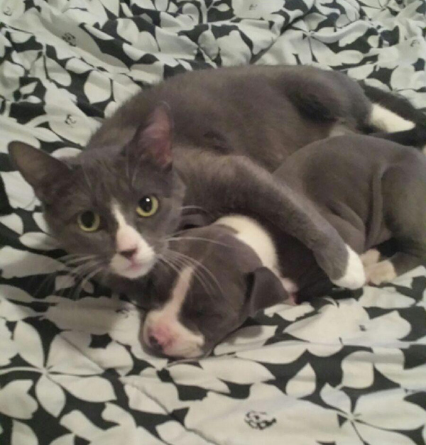 cat snuggling with puppy