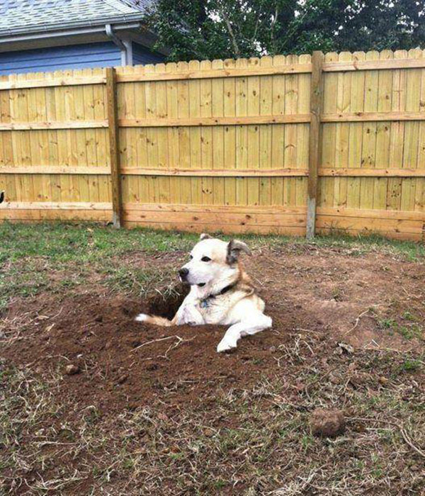 dog in giant hole
