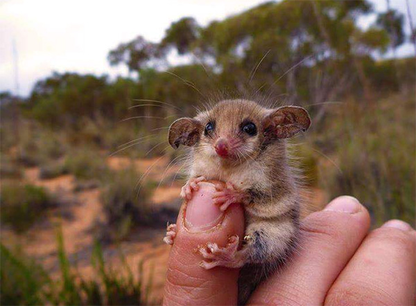 cute animals australia