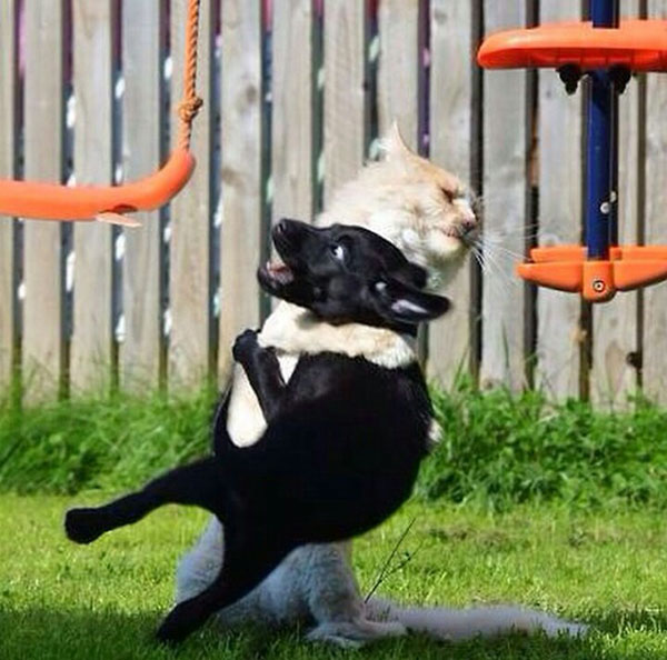 cat attack on dog funny