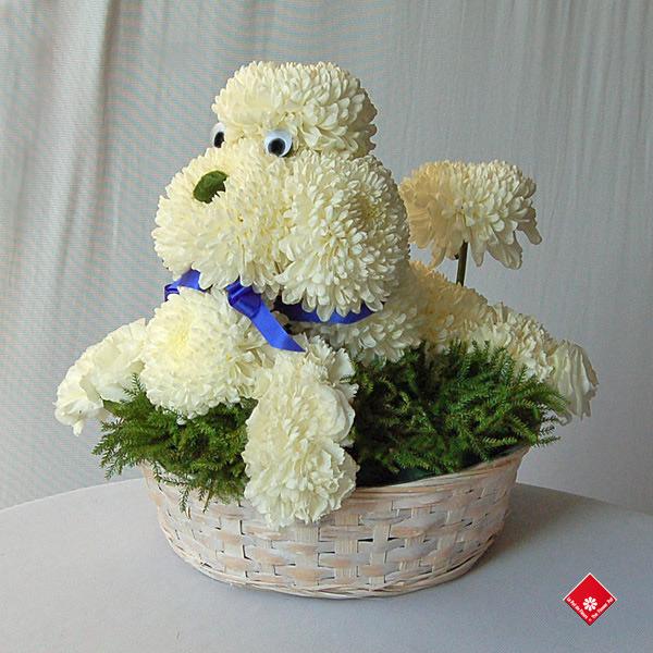 poodle flower arrangement