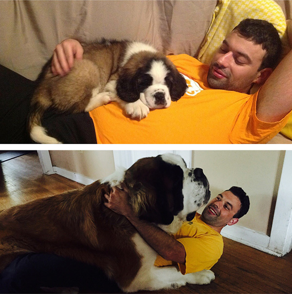 st bernard before and after