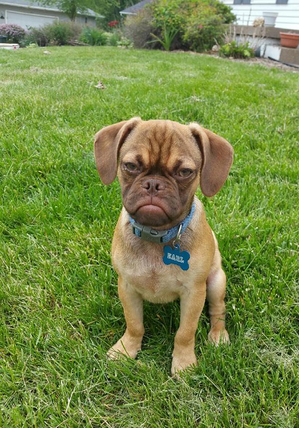 earl the grumpy puppy