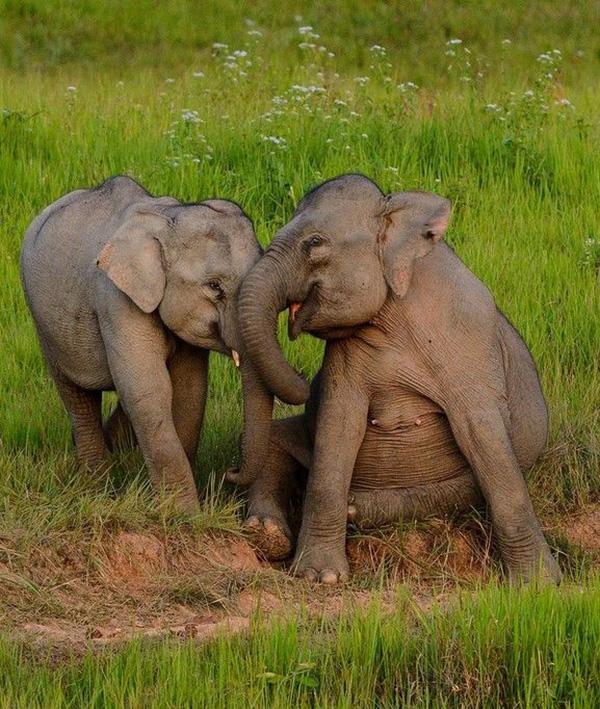 happy baby elephants at play