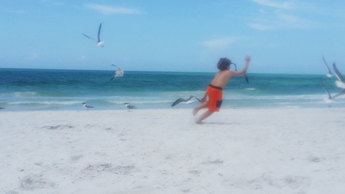 kid catches seagull on beach