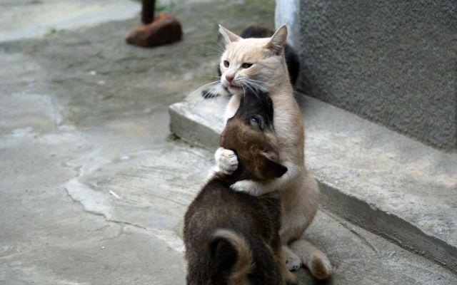 cat and dog hug