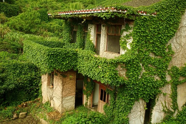 abandoned village taken over by Earth