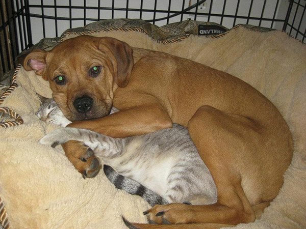 cat dog cuddling in bed