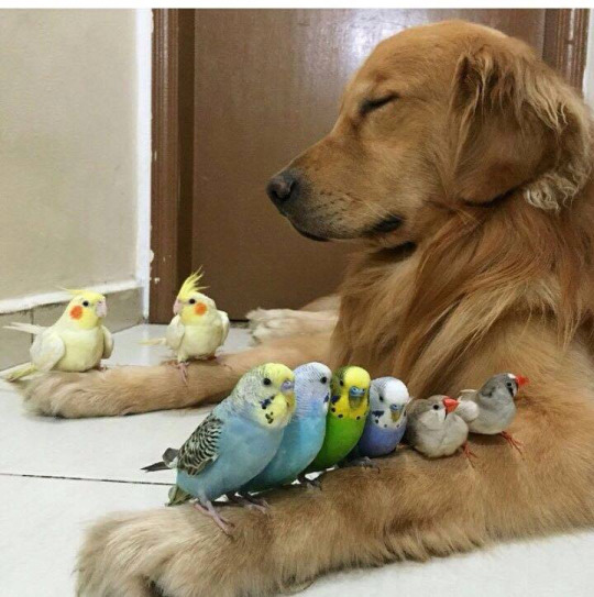 dog with birds