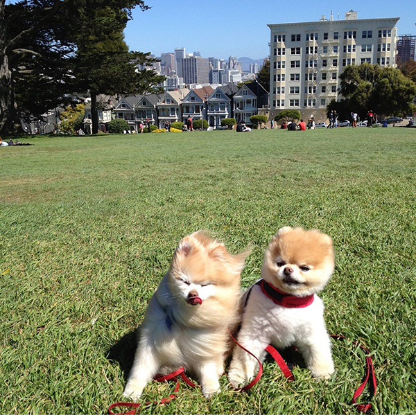 windy dogs