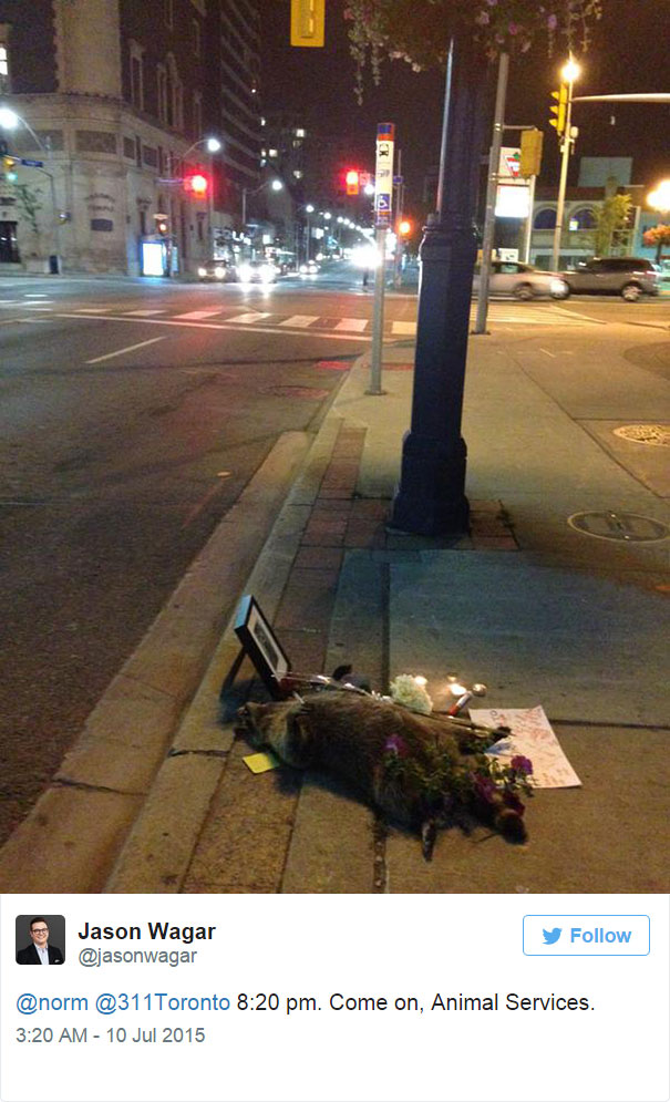 funeral for raccoon in Toronto