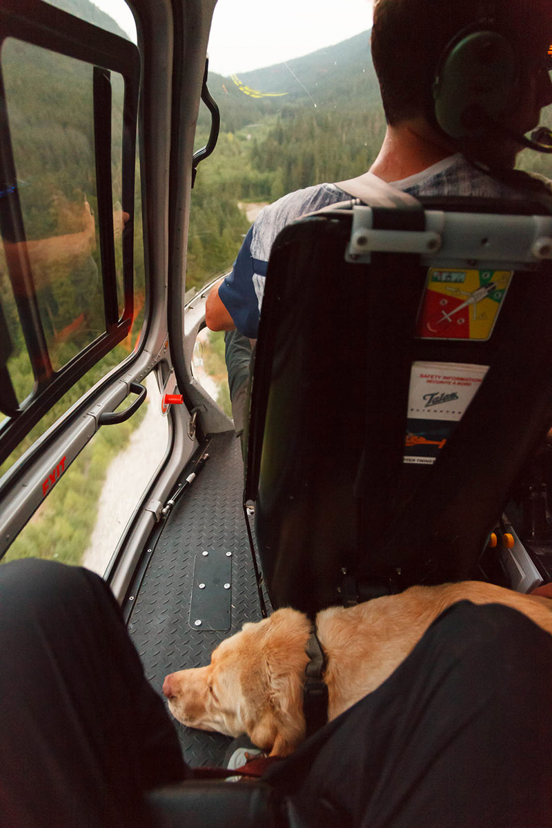 dog injured hiking gets helicopter ride